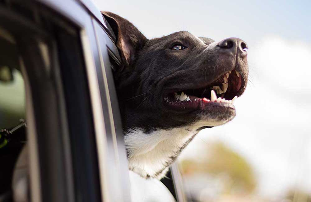 7 Tips On Dog Odor Removal From Your Car